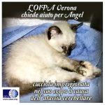 Aiutiamo Angel ad avere una vita! Con i volontari dell'OIPA Verona